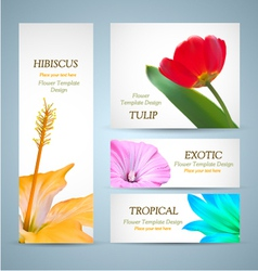 Seasonal Flowers Layouts vector image