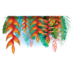Arangement with heliconia flowers vector