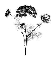 dill silhouette isolated on white vector image