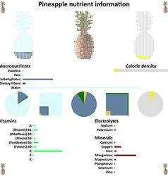 Pineapple nutrient information vector