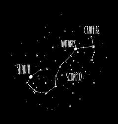 scorpio constellation hand draw vector image