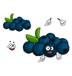 Cartoon Blueberry character vector image