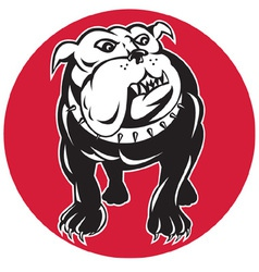 Bulldog mongrel dog facing front vector