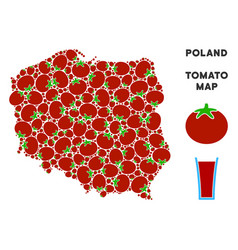 poland map composition of tomato vector image