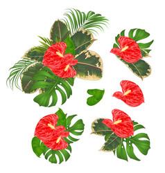 Tropical flowers floral arrangement anthurium vector