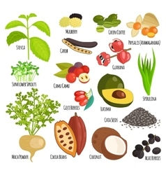 Vegetarian superfood healthy vegetable vector