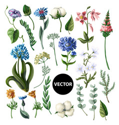Wild flowers isolated on a white background vector