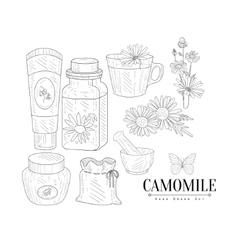 Camomile Cosmetics And Tea Hand Drawn Realistic vector