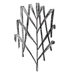 Date palm leaf vintage vector