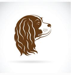 cavalier king charles spaniel dog on white vector image vector image