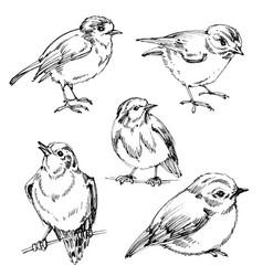 birds set hand drawn cute birds black outlines vector image vector image