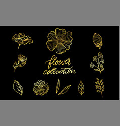 A set of engraved hand drawings in old or antique vector