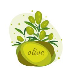 Green olive branches banner design for olive oil vector
