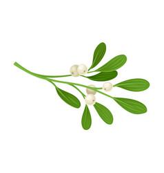 Mistletoe branch set colorful twig vector