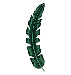 nice exotic leaf nature branch vector image