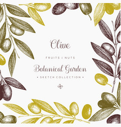 Olive branch wreath vector