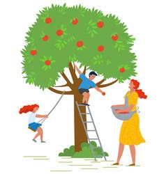 people picking apples ripe food on tree vector image