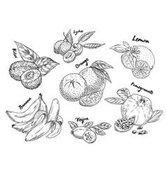 Sketches of banana pomegranate and kiwi orange vector