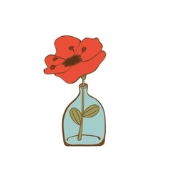 Beautiful poppy flower in glass bottle vector image vector image