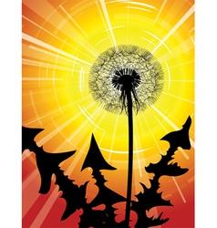 dandelion silhouette vector image vector image