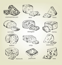 graphic sketch of different cheeses icons vector image