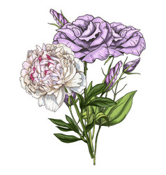 hand drawn bouquet of eustoma and peony flowers vector image