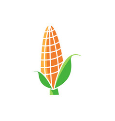 corn icon template isolated vector image