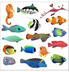 Exotic colorful tropical fish fishes collection vector