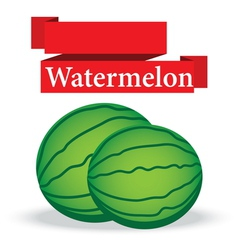 fresh watermelon on white background vector image