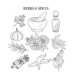 Herbs And Spices Isolated Hand Drawn Realistic vector