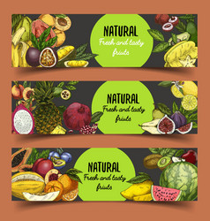 Signs and banner with tropical or exotic fruits vector