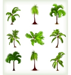 Set of various palm trees vector image vector image