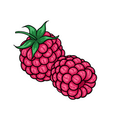 beautiful cartoon pink raspberries with black vector image