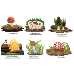different types of mushroom vector image