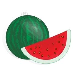 Watermelon fruit vector image