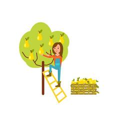 Farmer harvest from tree icon vector