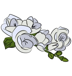 Freesia flower vector