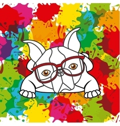 French bulldog and splash icon Pet and dog design vector