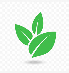 green leaf icon for vegan bio eco design vector image