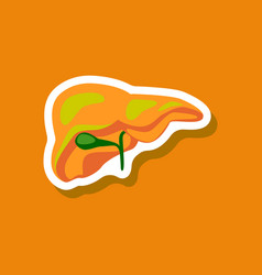 Liver paper sticker on stylish background vector