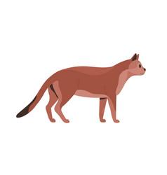 Side view mature cat feline animal standing vector