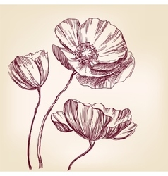 poppies hand drawn llustration realistic vector image vector image