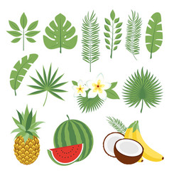 set of cute tropical leaves and fruits palm vector image vector image