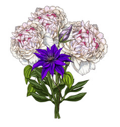 hand drawn bouquet of peony and wild field flower vector image