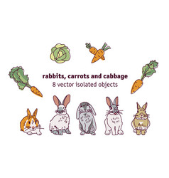 rabbits carrots and cabbage isolate objects vector image
