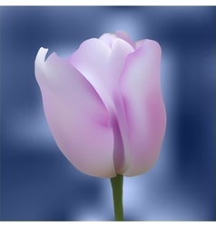 Realistic colorful tulip vector image