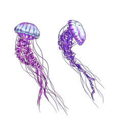 Two jellyfish purple and pink tints full color vector