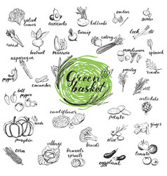 vegetables hand drawn sketches vector image