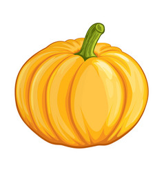 an orange pumpkin isolated vector image
