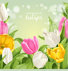 green background pink white and yellow tulips vector image